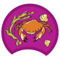crab-purple